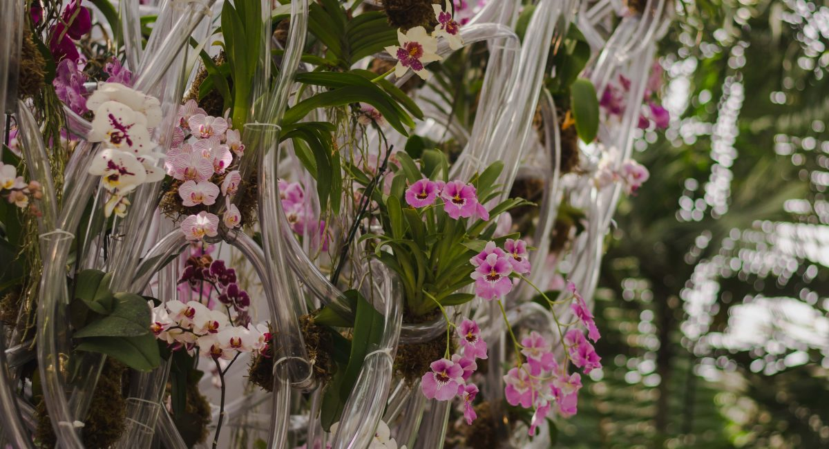 Orchid Show in New York Botanical Garden